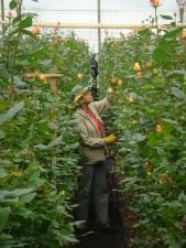 Colombian Farm Worker